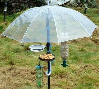 """Photo of well this is fun ~ keeps the birds dry while the plant hanger """"tree"""" provides di…"""