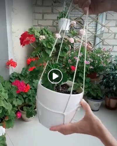 Photo of A quick way to turn a potted plant into a hanging plant.